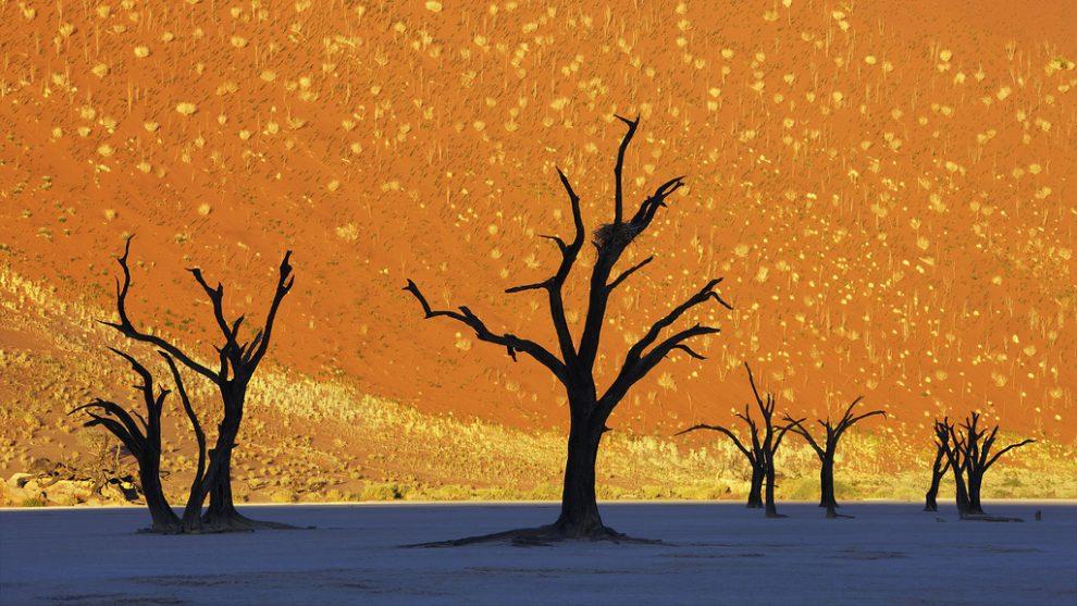 Dead Vlei Namibia -