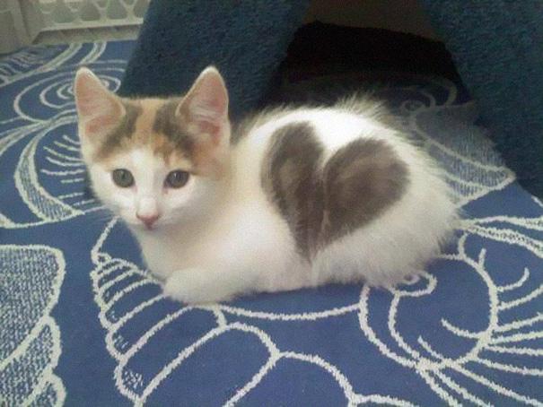 gattino con un cuore sul lato -