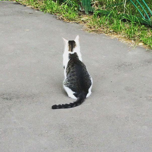 gatto con forma di un altro gatto dietro -
